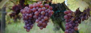 Wijn & Kaasproeverij @ De Kamper | Vught | Noord-Brabant | Nederland